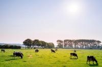 Enhanced_Collagen_Cheat_Sheet_grass_fed_cows